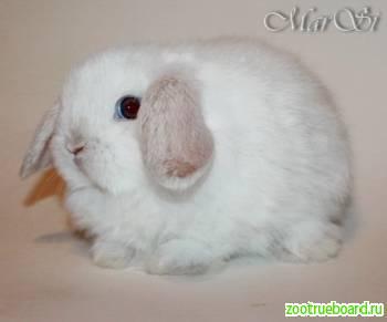 Карликовые крольчата из питомника продажа