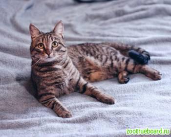Кошка Дымка для семьи с детьми