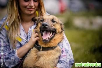 Ласковый пес-компаньон Джордан