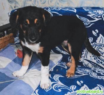Афина - ласковый щенок