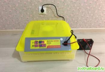 Бытовой инкубатор для 48 яиц с контролем температуры