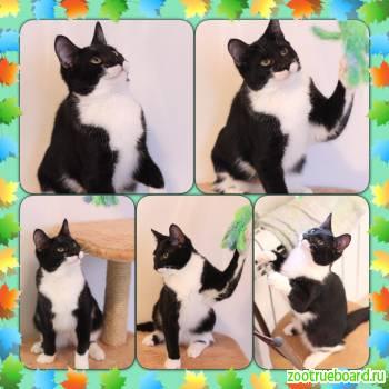 Черно-белый котик ищет дом.