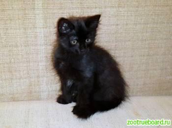 Черный котенок Тилли в поисках дома