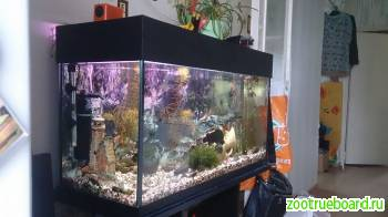 Чистка аквариума и Обслуживание аквариума.
