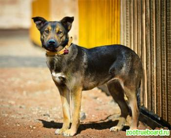 Деликатная и верная собачка Лола ищет дом.