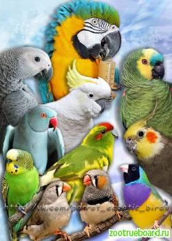 Домашний приют для птиц.