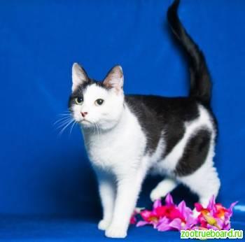 Дуся - молодая активная кошка ищет дом. ) )