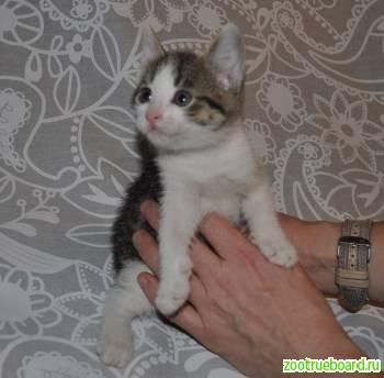 Два чУдных котенка в добрые руки