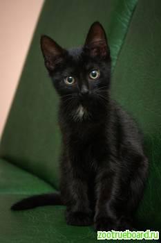 Две маленькие черные ночки,  котята-сестрички,  в поиске своих идеальных семей!