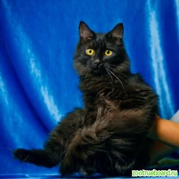 Годовалый котик   Валли ищет дом