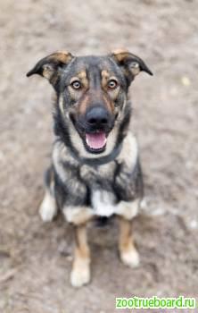Идеальная собачка-компаньон Вита в поисках хозяев и дома