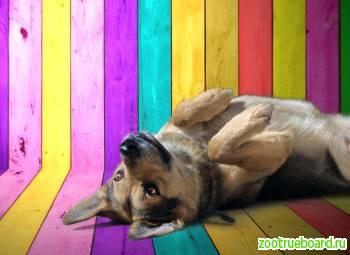 Ищет свой дом мудрый пес Бублик