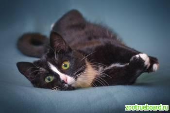 Кошечка Оливка ищет родителей!  В любящие руки!