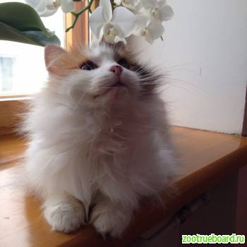 Кошка Алиса в поисках дома