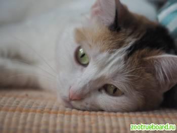 Кошка Хвостя ищет новый дом!