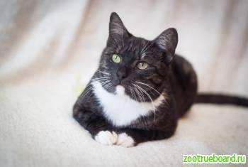 Кошка Кассиопея