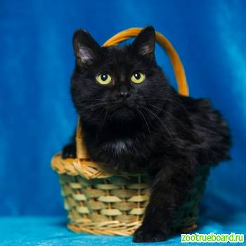 --Кошка Клякса ищет хозяев