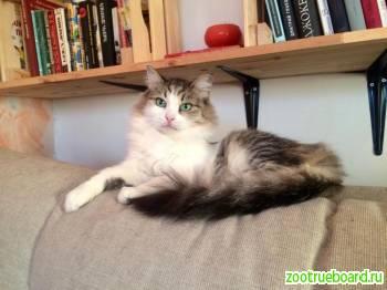 Кошка Муся ищет самый лучший дом!