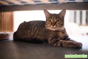 Кошка Полли ищет самый лучший дом!