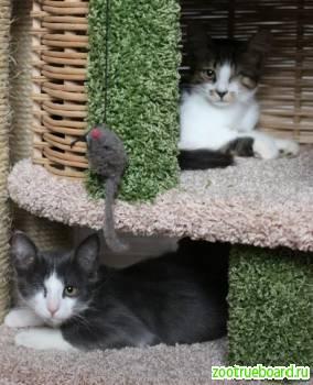 Космические котята Емеля и Тюлька в добрые руки!