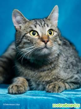 Кот подросток Фунтик ищет хозяев! ! . .