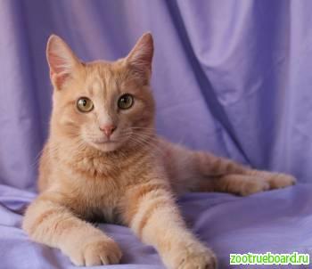 Котенок-подросток Лео в добрые руки