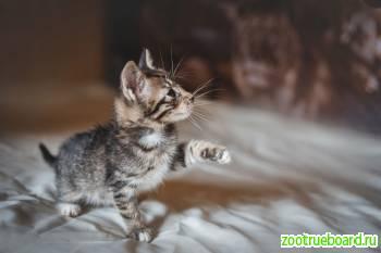 Котенок Степа в поисках семьи