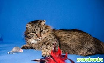 Котик Ежик в добрые руки.