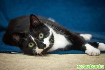 Котик Родион в поисках дома!  В добрые руки!