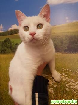 Котик Снег,  возраст 2 года,  очень хочет домой.