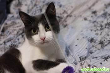Котик Спайк ищет самых лучших родителей