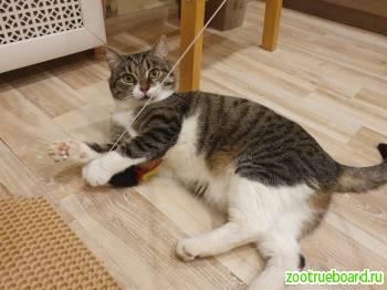 Котик Тимоша в добрые руки