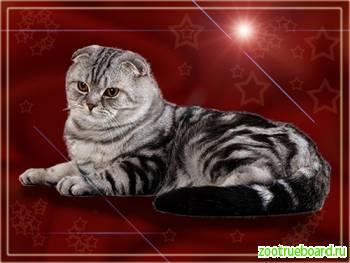 Котики приглашают кошечек на вязки