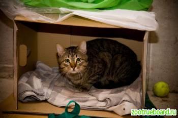 Ласковый кот Гриша нуждается в семье.