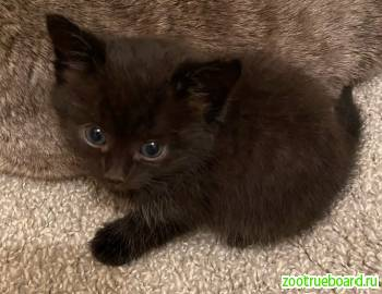Маленькие котята ищут свой дом.