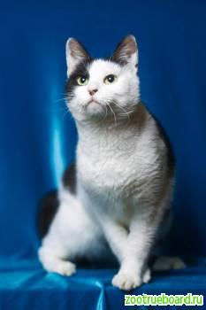 Молодая активная кошка Дуся  ищет хозяев