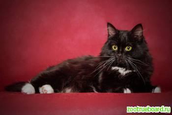 Молоденький котик очень ищет семью!