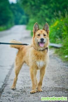 Молодой и забавный  пёс Тоби ищет дом