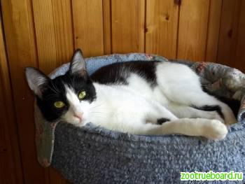 Нежнейший кот Феликс в добрые руки