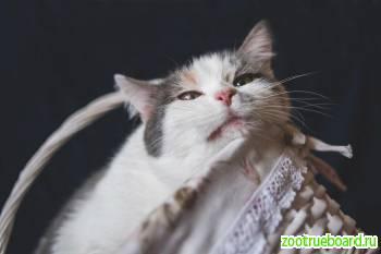 Обворожительная,  уютная,  некрупная кошка Элис в добрые руки