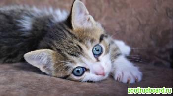 Очаровательные котята в дар.