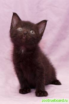 Очаровательные пушистики котята ищут дом