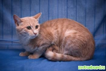 Одуван – отличный котик мечтает о доме