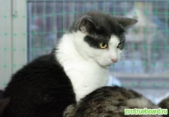 Оливия,  кошка-аутитихая,  робкая и нелюдимая.  Нужен дом
