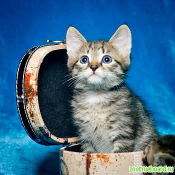 Отдам котенка в полосочку.  1. 5 мес