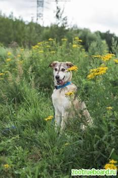 Отличница Ника - чудесная собака в дар