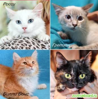 Подрощенные котятки из приюта в дар
