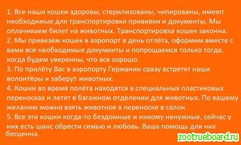 Попутчик МОСКВА-ГЕРМАНИЯ для наших кошек!
