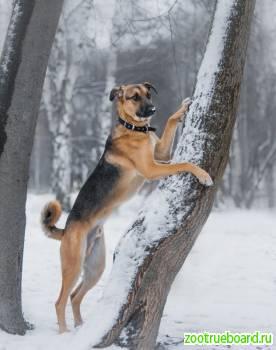 Потрясающий и добрый пёс Дин в поисках дома