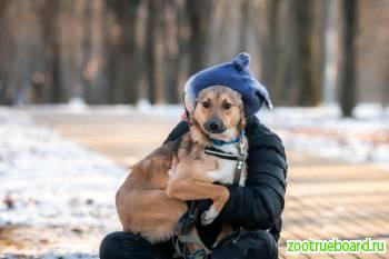 Приютская собачка малышка Мия ищет дом